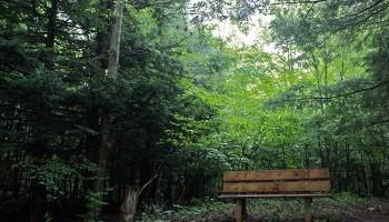 Coldbrook Preserve