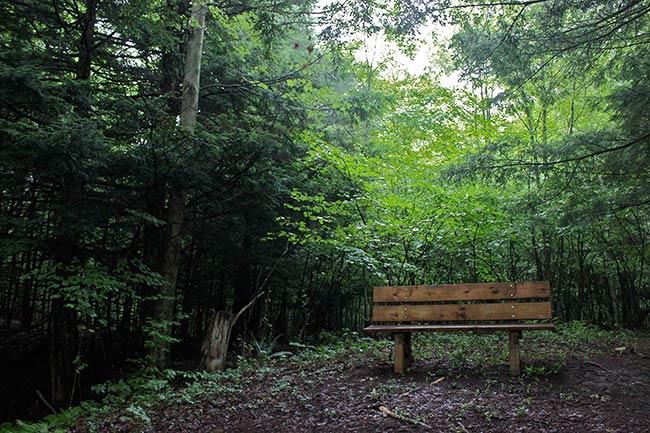 Coldbrook Preserve bench