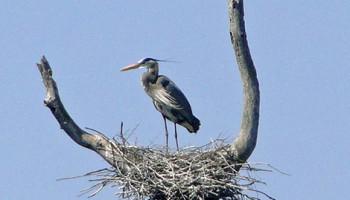 Ballston Creek Preserve