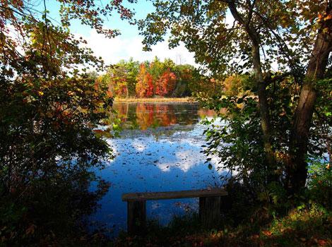 Bog Meadow Preserve