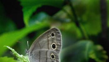 Orra Phelps Nature Preserve