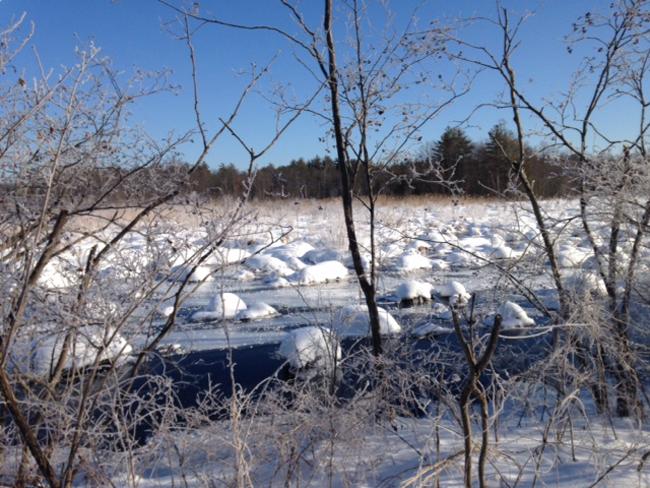 frozen bog meadow