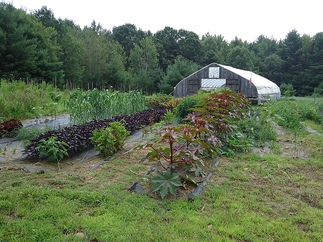 Workshop: Unravel the Mysteries of Farmland Conservation