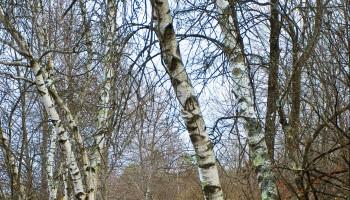 Bog Meadow Trail