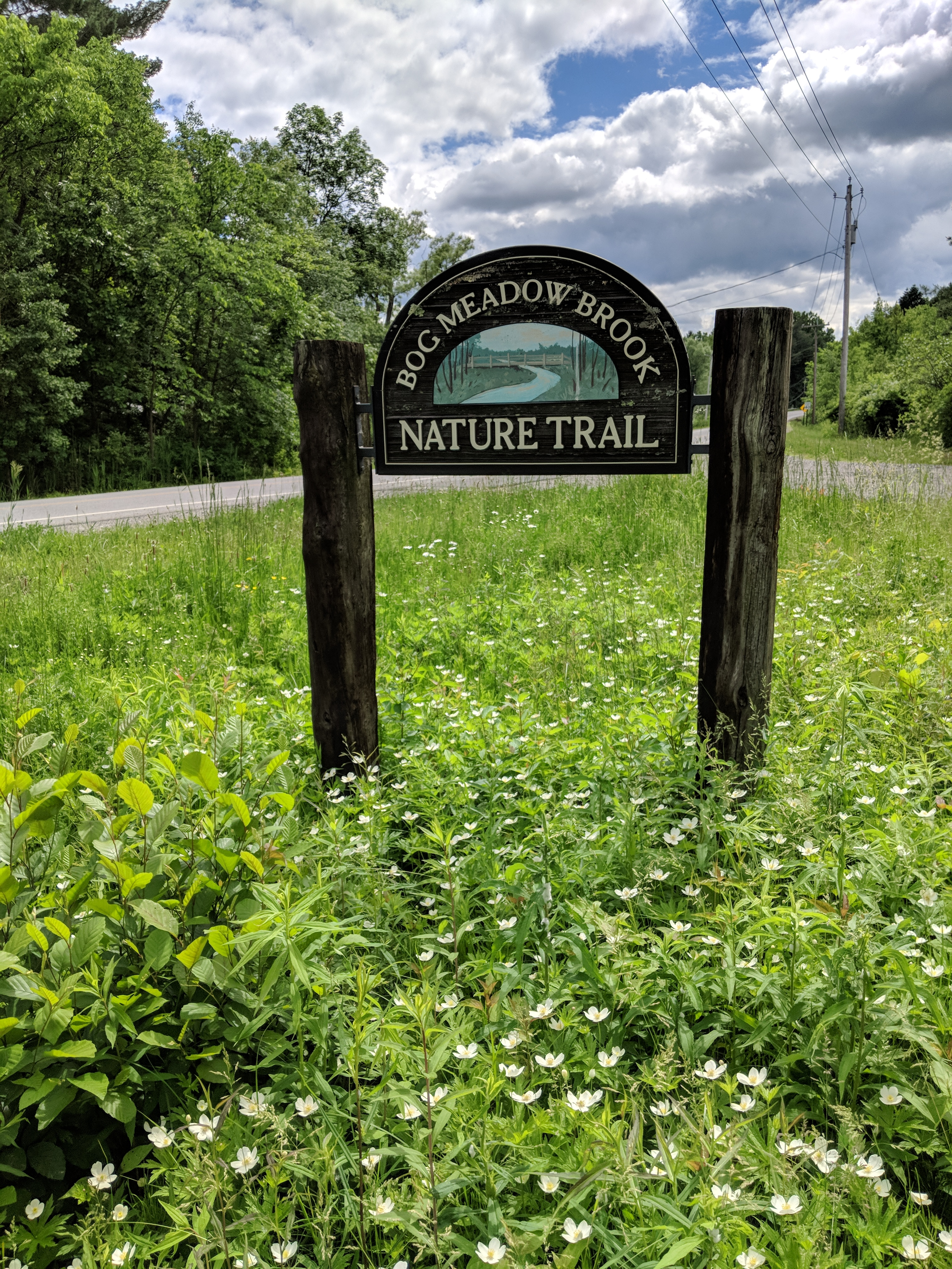 Bog Meadow Trail Reopening