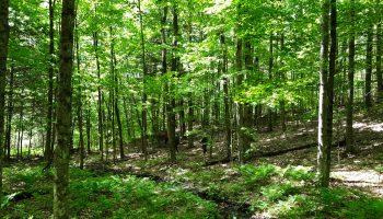 Barkersville Trails