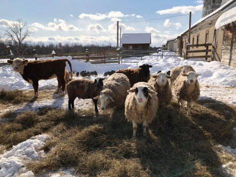 farmland leasing workshop